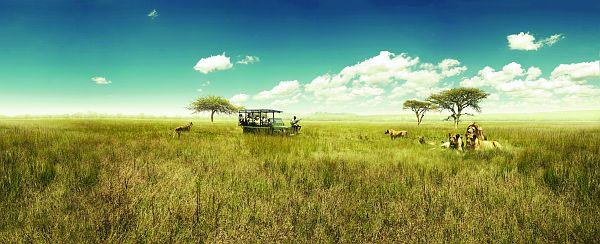 Afrique du Sud - Safari