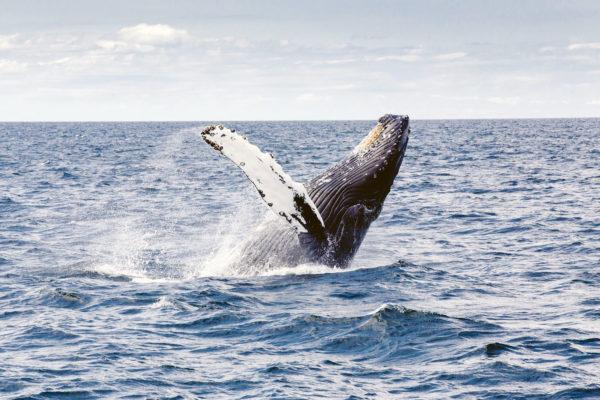 baleine - canada