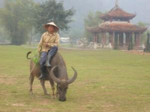 Paysan et son buffle - Vietnam