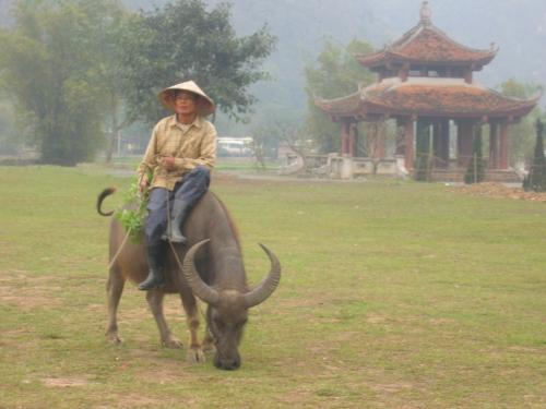 Vietnam - paysan et son buffle