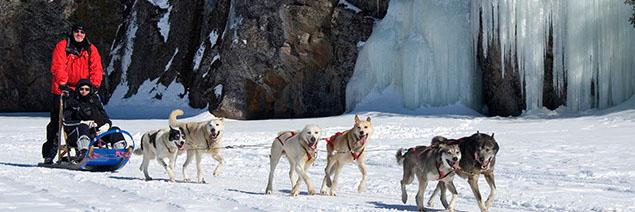 hiver - chiens de traineau - canada