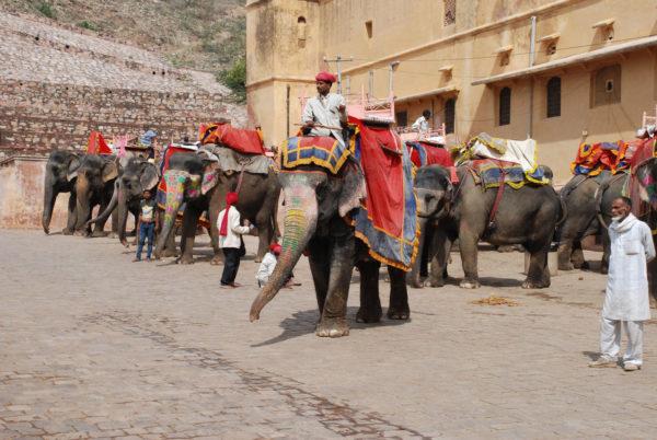 jaipur - éléphants