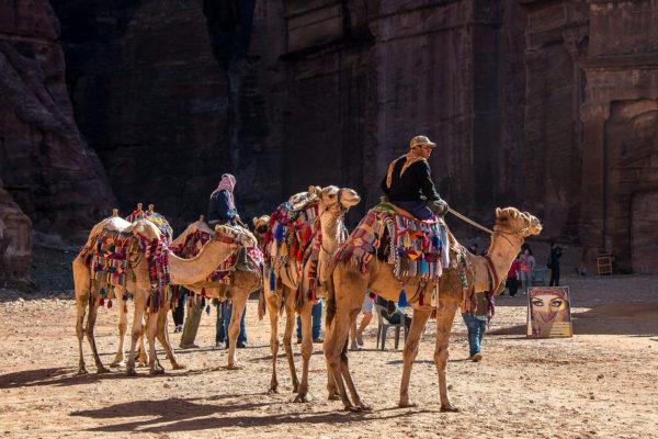 Jordanie - Circuit - Chameaux à Petra