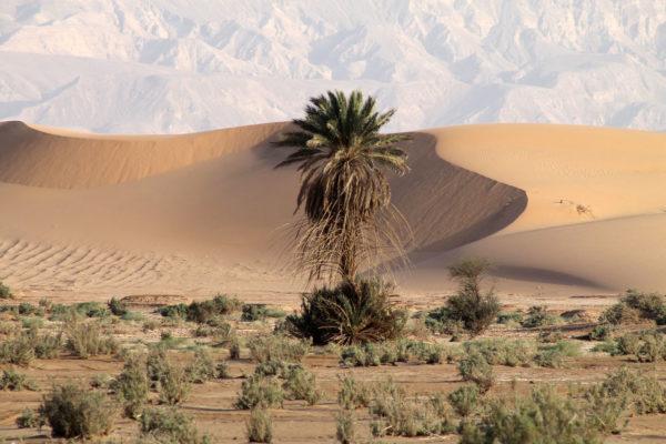 Jordanie - Circuit - désert