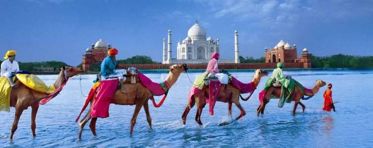 Inde - caravane dromadaires
