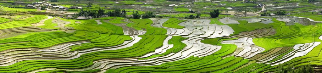 paysage agricole - vietnam - circuit